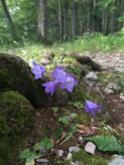 wild flowers forest