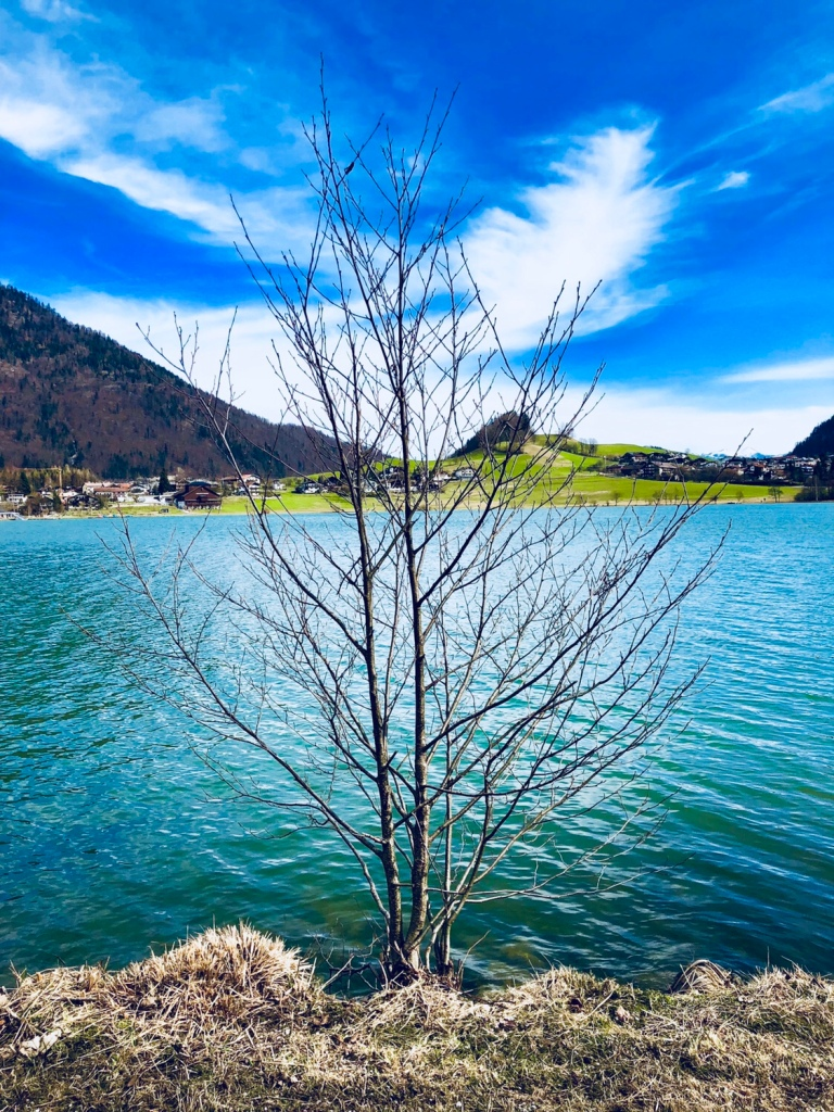 lake thiersee tree