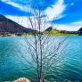 lake thiersee tree